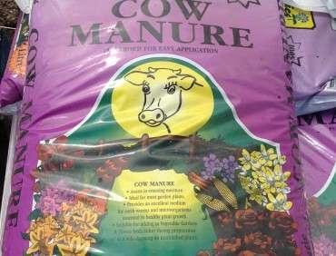 Cow Manure