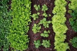 Garden-Soils-300x200