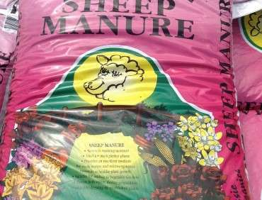 Sheep Manure